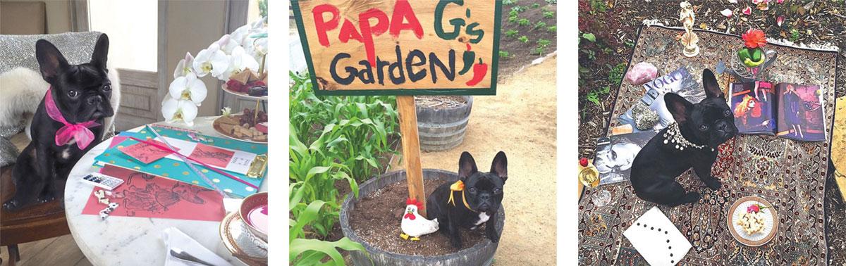 lady-gaga-puppy-line.jpg